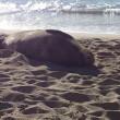 【他言厳禁】野生のアザラシがほぼ確実に見れるローカルビーチ